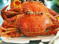 Ăn gì khi đến Phú Quốc ? Top 6 đặc sản không thể bỏ qua