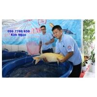 Bồn tròn lớn chứa nước, nuôi cá cảnh Lhe 0967788450 Ngọc