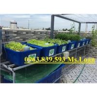 Khay nhựa trồng rau Aquaponics, khay nhựa nuôi cá cảnh rẻ./ 0963.839.593 Ms.Loan